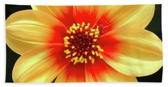 Dahilias Flower Up Close Bath Towel