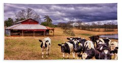 Dairy Heifer Groupies The Red Barn Art Hand Towel by Reid Callaway
