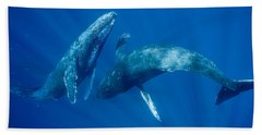 Dancing Humpback Whales Hand Towel by Flip Nicklin