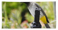 Bath Towel featuring the photograph Dark-capped Bulbul by Betty-Anne McDonald