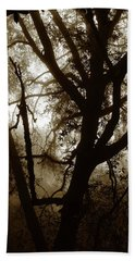 Hand Towel featuring the photograph Deep In The Sequoia National Forest by Ayasha Loya