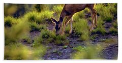 Deer At Crater Lake, Oregon Hand Towel