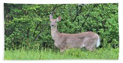 Hand Towel featuring the photograph Deer by Debbie Stahre