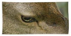 Deers Gentle Eye Hand Towel