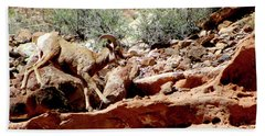 Desert Bighorn Ram Walking The Ledge Bath Towel