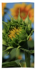 Bath Towel featuring the photograph Developing Petals On A Sunflower by Chris Berry