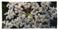 Dew On Queen Annes Lace Hand Towel