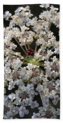 Hand Towel featuring the photograph Dew On Queen Annes Lace by Lynn Quinn