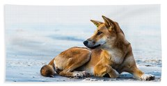 Dingo On Fraser Island Beach Bath Towel