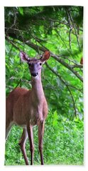 Doe And Cardinal Bath Towel