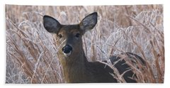 Doe In Winter Hand Towel