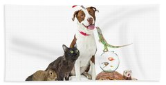 Domestic Pets Group Together With Copy Space Hand Towel