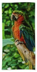Hand Towel featuring the photograph Don't Ruffle My Feathers by Marie Hicks