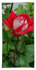 Hand Towel featuring the photograph Double Delight Hybrid Tea Rose by Jay Milo