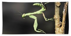Praying Mantis  Hand Towel