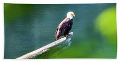 Eagle In Lake Hand Towel