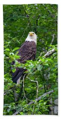 Eagle In Tree Hand Towel