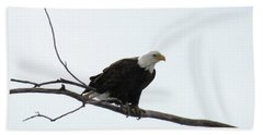 Eagle On The Tree Branch Hand Towel by Yumi Johnson