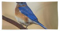 Eastern Blue Bird Male Bath Towel