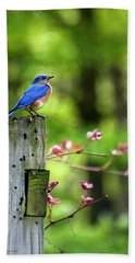 Eastern Bluebird Hand Towel by Christina Rollo