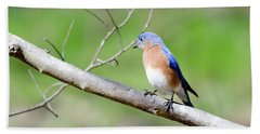 Bath Towel featuring the photograph Eastern Bluebird by George Randy Bass