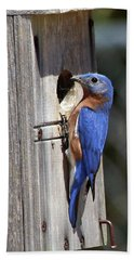 Eastern Bluebird Hand Towel
