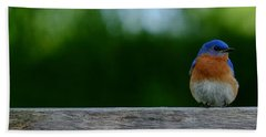 Eastern Bluebird - Male Bath Towel