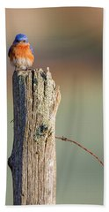 Hand Towel featuring the photograph Eastern Bluebird Portrait by Bill Wakeley