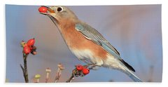 Eastern Bluebird With Berry Hand Towel