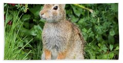 Hand Towel featuring the photograph Eastern Cottontail by Ricky L Jones