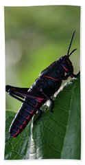 Eastern Lubber Grasshopper Hand Towel by Richard Rizzo