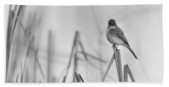 Bath Towel featuring the photograph Eastern Phoebe 2017 by Thomas Young