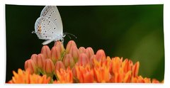 Eastern Tailed Blue On Butterfly Weed Hand Towel