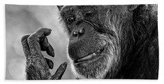 Elderly Chimp Studying Her Hand Hand Towel