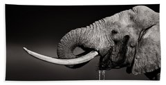 Elephant Bull Drinking Water - Duetone Hand Towel