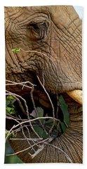 Elephant Curl Bath Towel