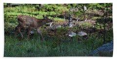 Baby Elk Rmnp Co Hand Towel