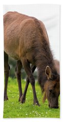 Elk Grazing On Green Pasture Closeup Hand Towel