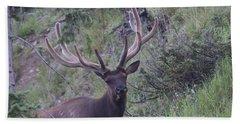 Bull Elk Rmnp Co Hand Towel