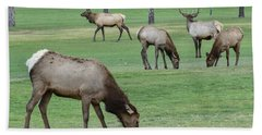 Elk On Golf Course Estes Park Colorado Hand Towel