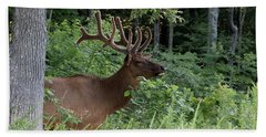 Elk Portrait Bath Towel