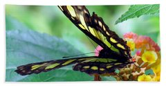 Elusive Butterfly Hand Towel