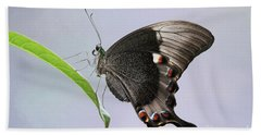 Emerald Peacock Swallowtail Butterfly V2 Hand Towel