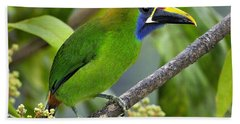 Emerald Toucanet Bath Towel by Tony Beck