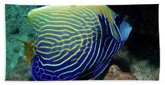 Emperor Angelfish, Red Sea 1 Hand Towel