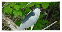 Evening Snack For A Night Heron Bath Towel by Donald C Morgan