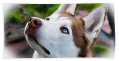 Expressive Siberian  Husky Photo C62017 Hand Towel