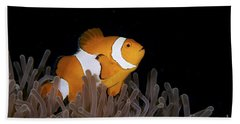 False Clownfish And Anemone Hand Towel