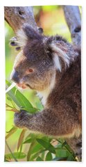 Hand Towel featuring the photograph Feed Me, Yanchep National Park by Dave Catley