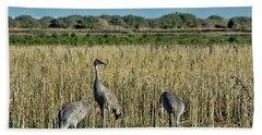 Feeding Greater Sandhill Cranes Hand Towel by Daniel Hebard